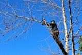 כריתת עצים בגינה פרטית